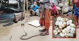 বাঘারপাড়ায় শোবার ঘর থেকে গোখরা সাপ উদ্ধার