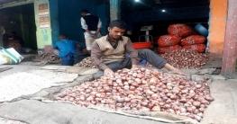 চৌগাছায় পেঁয়াজের বাম্পার ফলন, নায্য মূল্য পেয়ে খুশি কৃষক