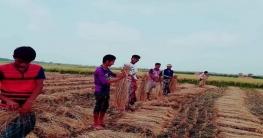 অভয়নগরে দুই অসহায় কৃষকের ধান কেটে দিলো ছাত্রলীগ