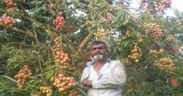 কালীগঞ্জে লিচু চাষে স্বাবলম্বী কৃষক