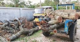 বাঁকড়ায় সরকারি গাছ কাটার সময় ৮জন আটক
