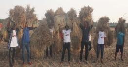 কেশবপুরে কৃষকের ধান কেটে বাড়ি পৌঁছে দিচ্ছে ছাত্রলীগ