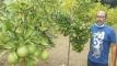 সফটওয়্যার ইঞ্জিনিয়ার মুন্না আজ মাল্টা চাষে লাখোপতি
