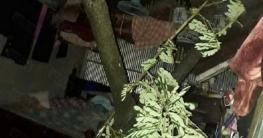 আম্ফান: চৌগাছায় গাছ চাপা পড়ে মা মেয়ের মৃত্যু